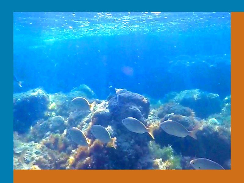 fish_800x600
